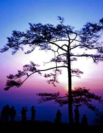 Big tree silhouetted on sunrise photo