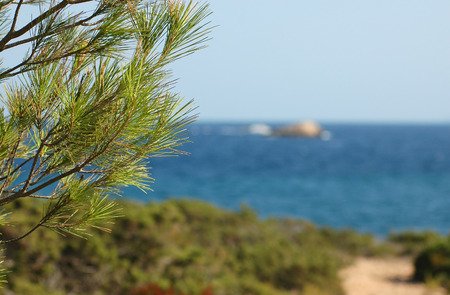 pinetree: Pine-tree on an island shore Stock Photo