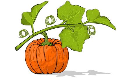 orange peel: Pumpkin under its leaves