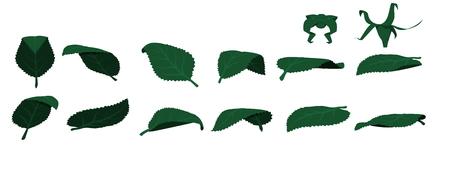 stem: Leaf without stem,element for designer Illustration