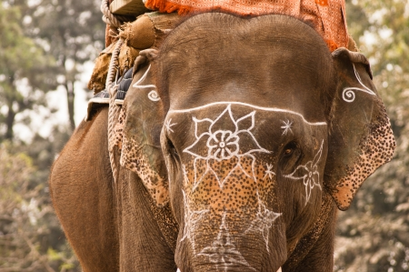 Domesticated indian elephant with flower white signs, Patwal, India Redakční