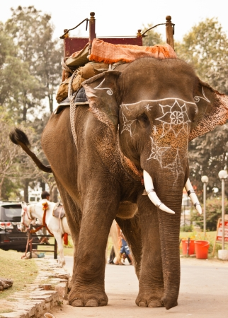 Domesticated Indian elephant with white decorations, Patwal, India