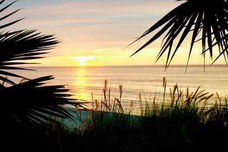 Cabo San Lucas Palm Beach Sunrise