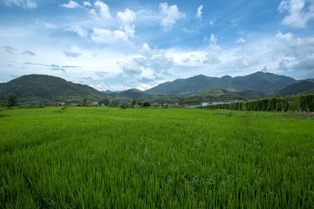 Landscape background of green grass, blue sky and white clouds in rice field.