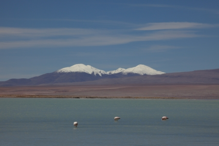 Laguna Colorada Flamingo Bolivia photo