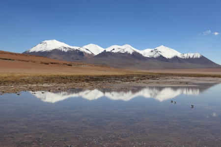 laguna: Laguna Celeste Altiplano Bolivia