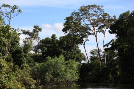 parque: parque natural rio Yacuma