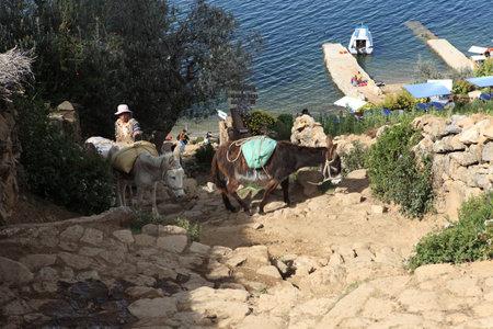 Donkey Transport Lake Titicaca