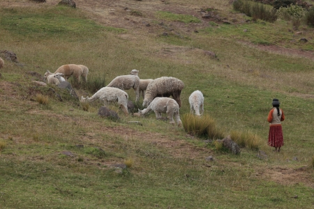 herdsman: Animal Farming in Peru