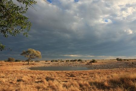 pozo de agua: La charca de Etosha Okaukuejo