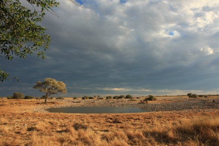 waterhole: The Okaukuejo Waterhole in Etosha