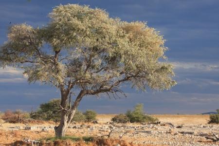 waterhole: La charca de Etosha Okaukuejo
