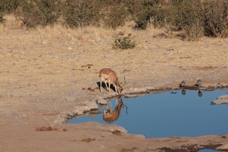 pozo de agua: Impala