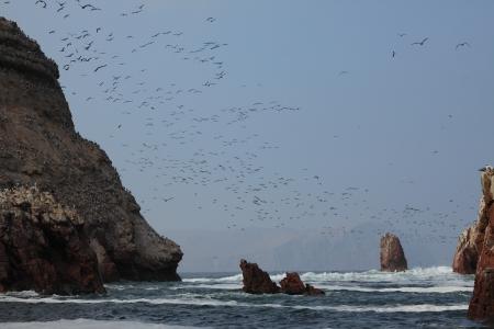 boobies: Islas Ballestas Peru Stock Photo