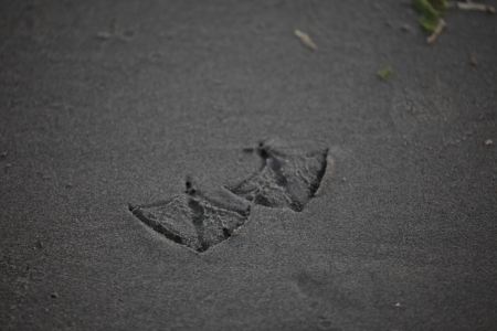 footmark: Duck Footprint Stock Photo