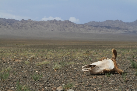 Skull of Cow and Horse