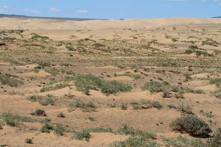 gobi desert: Oasis in the Desert Gobi Stock Photo