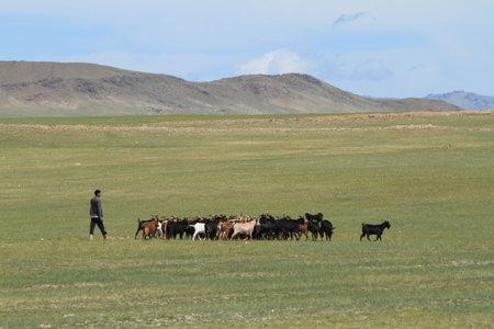 Goat Herder Stock Photo - 26187523