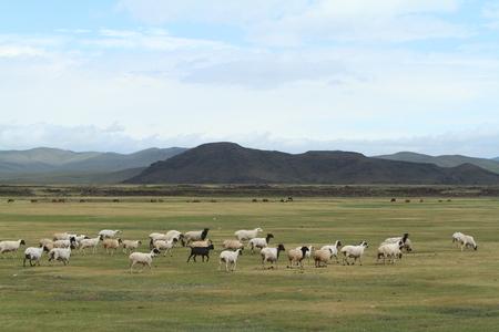 Goat Herd Stock Photo - 26183290