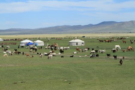 Yurt Village Mongolia