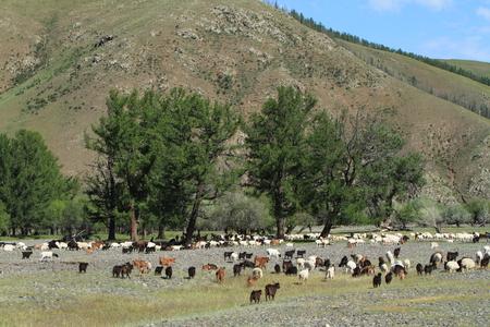goats Stock Photo - 26336844