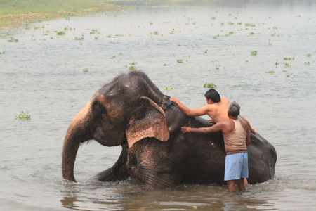 mahout: Mahout with Elephant
