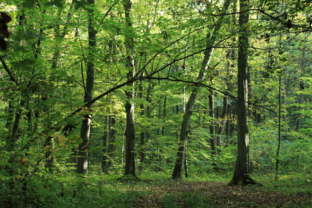 하이 니치 삼림의 정글 스톡 콘텐츠