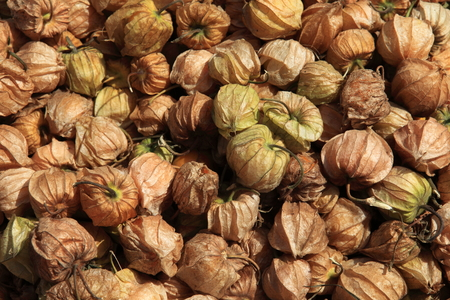 andes: Physalis or Andes Berry