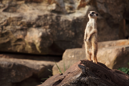 kalahari: Meerkats of the Kalahari