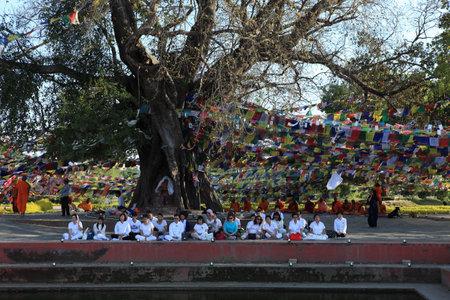Bodhi tree in Lumbini Buddha