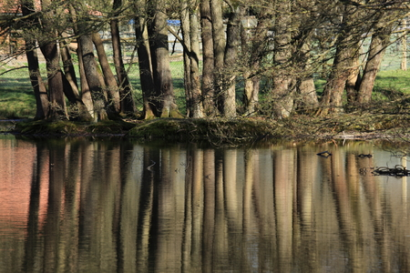 copse: Forest feflections on a lake