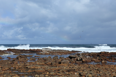 cape of good hope: Cormorants the Coast of the Cape of Good Hope in South Africa