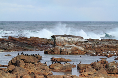 kap: Cormorants at the Coast of Kap of Good Hope Stock Photo