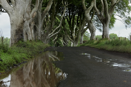 hedges: Avenue of trees Dark Hedges in Ireland Stock Photo