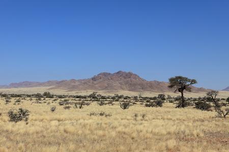 savannah: Savannah landscape in Namibia