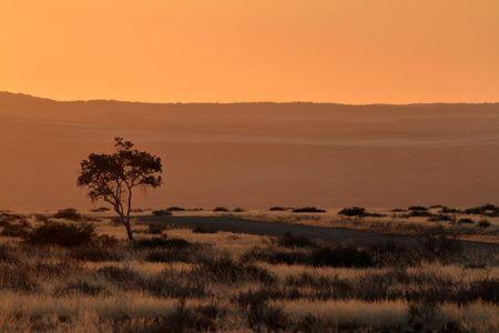 Sunset in the savannah of Namibia in Africa