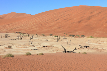 namib: The Namib desert with the Deadvlei and Sossusvlei in Namibia
