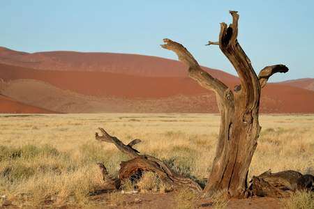 The Namib desert with the Deadvlei and Sossusvlei in Namibia