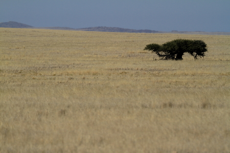 namibia: The savanna of Namibia in africa Stock Photo