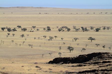savanna: The savanna of Namibia in africa Stock Photo