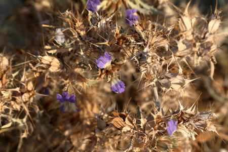 namib: Flowers in the Namib Desert of Namibia