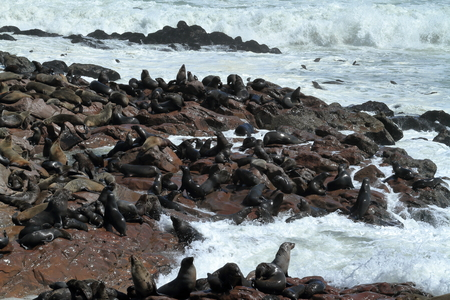 namibia: Seal colony at Cape Cross in Namibia