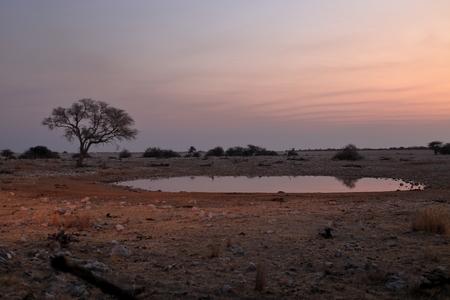pozo de agua: Charca en el Parque Etosha, en Namibia Foto de archivo