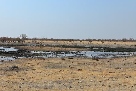 at waterhole: Animales en una charca en el Parque Etosha, en Namibia