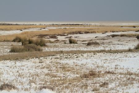 namibia: The Etosha salt pan in Namibia