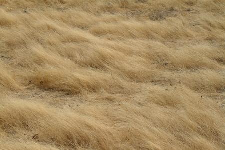 savannah: Grassland and savannah in Namibia