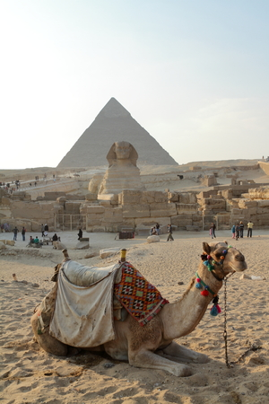 cheops: Camel at the pyramids of Cairo Stock Photo