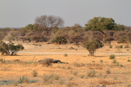 The savannah in the Etosha National Park in Namibia