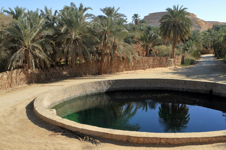 desert oasis: The Siwa Oasis in the Sahara in Egypt