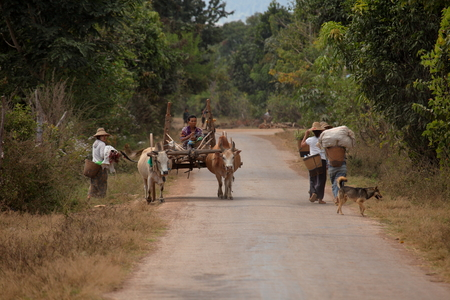 strained: Farmer with his Ox Team in Myanmar